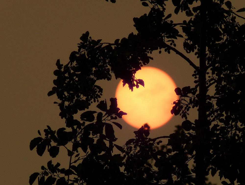 rode zon door saharazand