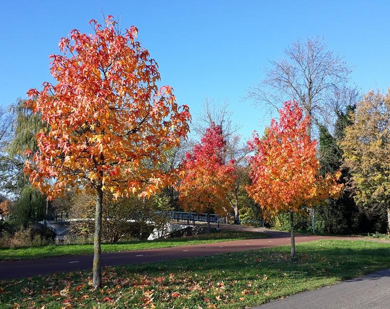 bomen herfstkleuren